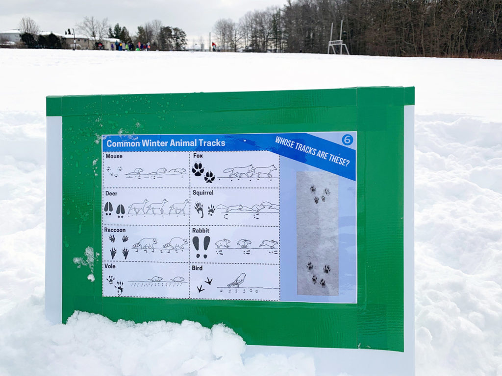 An educational sign with animal tracks sitting in the snow
